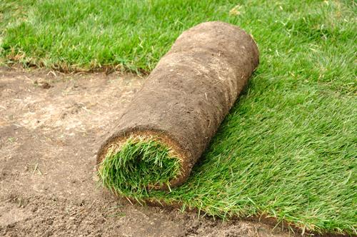 natuur graszoden kopen