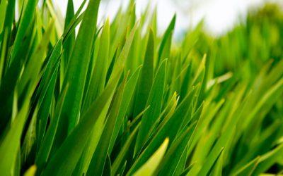 Groen Gras Gazon