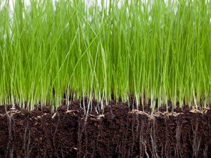 nieuw gras